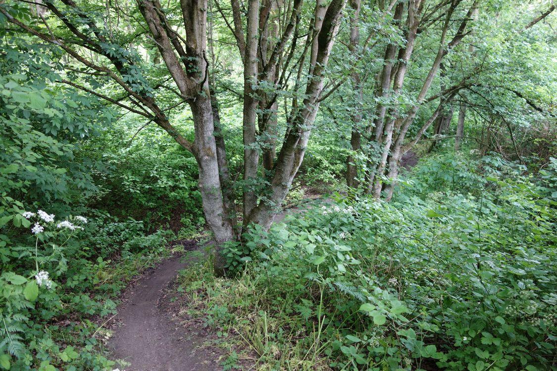 mountainbike huren geestmerambacht single track